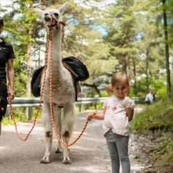 Elternzeit-Reise: Die Pirchhof-Lamas